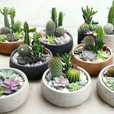 47 How To Make An Indoor Succulent Dish Garden is part of Indoor garden apartment You don& need to purchase accessories that cost a lot of money Trendy succulents are fun and simple to grow, makin - Succulent Arrangements, Cacti And Succulents, Planting Succulents, Cactus Plants, Cactus Flower, Succulent Display, Flower Pots, Flower Bookey, Flower Film