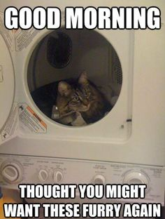 they always sleep on the laundry