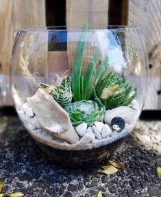 Tulip Terrarium Auckland, Terrarium, Tulips, Home Decor, Terrariums, Tulip, Interior Design, Home Interior Design, Home Decoration