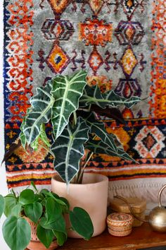 Alocasia Plant - How to Grow Care Guide - Elephant Ear Plant Planta Alocasia, Alocasia Plant, Green Leaves, Plant Leaves, Plants Are Friends, Elephant Ears, African Masks, Houseplants, Indoor Plants