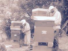 #BeeHappyDSP è #Lavoro e rispetto per la #Natura