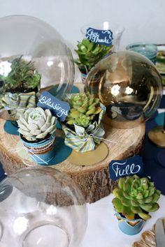 Table Setting. Wrapping succulents in fabric