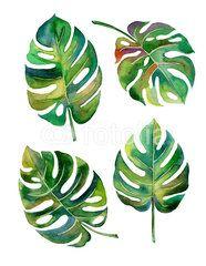 Split Leaf Philodendron watercolor on white background vector,illustration EPS10