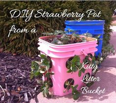 #DIY #upcycled Strawberry Pot from a Kitter Litter Bucket