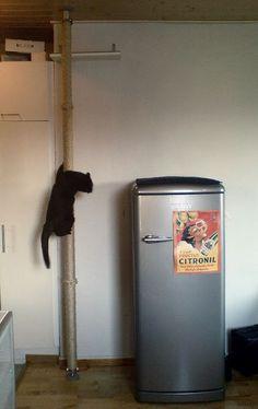cat scratcher pole climber, plus LOVE the fridge. Ikea hack