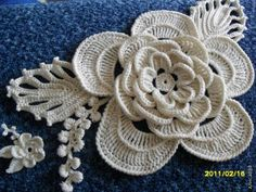 Eloquent large flower with picot edged leaves - vines with picots also - wonderful !!