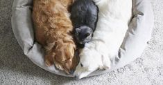 Two Loving Pups Plus One Cuddly Cat Are Adding Millions Of Smiles To InstagramSpoil Your Pet