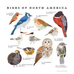 North American Birds Print now featured on Fab.