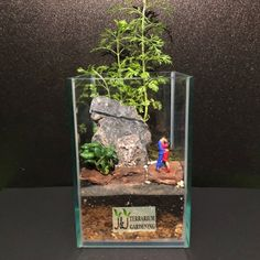 804 Lovers Terrarium Moss Terrarium, Singapore, How To Find Out, Lovers, Gardening, Crafts, Manualidades, Lawn And Garden, Handmade Crafts