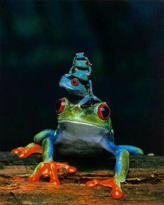 Frog stacking.