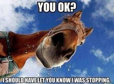 Here are the best funny horse memes all in one place. If you know someone horsey, share it with them! The best funny horse memes online. Funny Horse Memes, Funny Horses, Funny Animal Memes, Animal Quotes, Cute Funny Animals, Funny Animal Pictures, Funny Cute, Horse Humor, Animal Humor