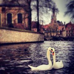 El Minnewaterpark, o parque del Lago del Amor, como también se le conoce, está situado al sur de Brujas, a sólo unos pasos de su estación de trenes. En el podemos encontrar hermosos puentes( de ahí el nombre de la cuidad), bellos cisnes y muchos enamorados gozando del paisaje. Es llamada la Venecia del norte.  Brugge/ Bélgica