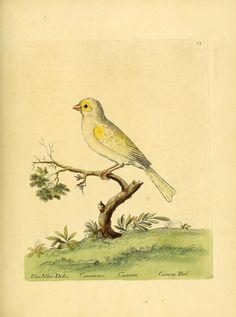 v. 1 - A natural history of birds : - Biodiversity Heritage Library