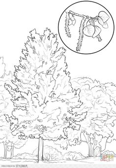 Click The Utah State Tree Coloring Pages To View Printable Version Or Color It Online Compatible With IPad And Android Tablets