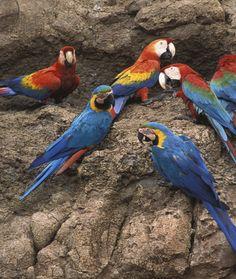 A Pandemonium of Parrots Dial M For Murder, Unusual Animals, Cockatiel, Parrots, Pet Care, Names, Group, Pets, La La Land