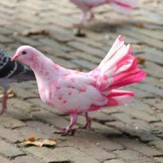 Wow... Beautiful Pink Pigeon!