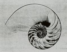 spiral mandala - Pesquisa Google
