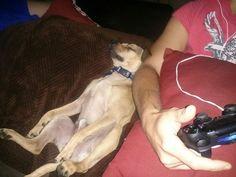 Sleepy Gaming Dog