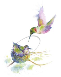 Humming - Humming Bird, Small Bird, Petite, Graceful, Nesting, Mother Bird, Baby Bird, Available in Paper and Canvas by Olga Cuttell