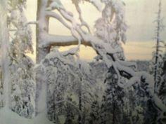 Ikihonkien huminaa. Pohjoisen luontokaupungin kauneus näyttäytyy monella tavalla mm. ikimetsät ovat voimaa antava kokemus ja saa varmasti jokaisen mielen rauhoittumaan. Monet, Snow, Outdoor, Outdoors, Outdoor Games, Outdoor Life, Human Eye