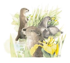 Otter Neighbors Artist Marjolein Bastin Painted 2010 Medium Watercolor Subject Location Missouri, USA Like this painting? This painting has not been published. Watercolor Artwork, Watercolor Flowers, Different Forms Of Art, Marjolein Bastin, Artist Supplies, Nature Artists, Dutch Artists, Nature Paintings, Otters