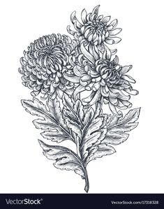Vector bouquet with black and white hand drawn chrysanthemum flowers in sketch style. Tribal Tattoos, Tattoos Skull, Black Tattoos, Chrysanthemum Drawing, Chrysanthemum Flower, Tattoo Coloring Book, Coloring Book Art, Crysanthemum Tattoo, Vintage Flower Tattoo
