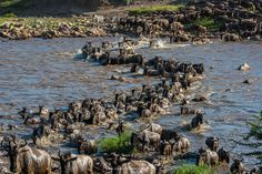 The great migration at the Mara River