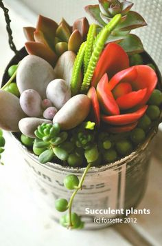 Anything makes a great succulent planter! Just allow yourself to be creative!