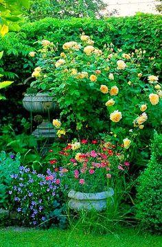 Urns in the garden border