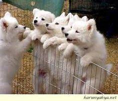 sevimli yavru köpekler, ile ilgili görsel sonucu