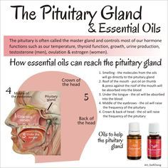 pituitary gland and essential oils