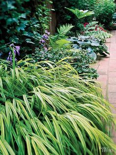 The graceful, bamboo-like stems of Japanese forest grass, Hakonechloa macra, will add a touch of elegance to any shady location. Japanese forest grass is a slow grower that will eventually reach 18 inches in height and width. It's especially effective planted along a wall or raised bed where the plant's slender foliage can cascade over the edge. Japanese forest grass prefers slightly moist, well-drained soil and is deer resistant. Zones 4-9