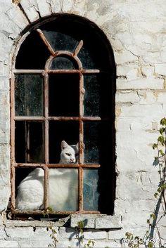 (4) windows   Tumblr