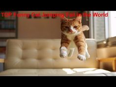 Funny Cat Jump Fail Compilation 2016-2017 - Most Funny Cat Jumping Fails - http://positivelifemagazine.com/funny-cat-jump-fail-compilation-2016-2017-most-funny-cat-jumping-fails/ http://img.youtube.com/vi/7Uy3DahGb68/0.jpg  Funny cat videos is a channel that often the updating uploaded a video about funny cat jump fail, and we also uploaded other funny videos such as funny cat … ***Get your free domain and free site builder*** Click to Surprise me! Please follow and l
