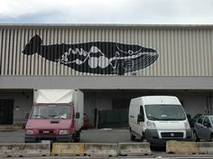 Last Great Whale. Balene ad Ancona. Fuga dal Museo - Andreco