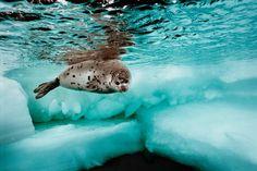 10 Beautiful Photos Celebrating World Oceans Day 2012