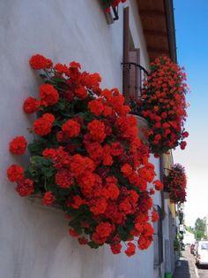 Jardineiras de balcão ou na fachada