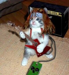 Listo para el Cat metal  www.pedaleras.com