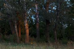 Waldviertel Dog Walking, Dogs, Plants, Photography, Woodland Forest, Photograph, Pet Dogs, Fotografie, Doggies