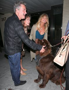 Making new friends: Goldie's spin around town came after she enjoyed a night out with her partner Kurt Russell in Beverly Hills, California, where they were ecstatic to meet a Newfoundland dog after their dinner