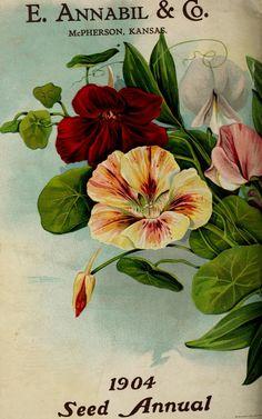 E.Annabil & Co. seed annual  1904 back cover