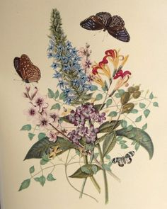 Summer Flowers Butterfly Botanical Illustration  by AngelGrace, $11.99