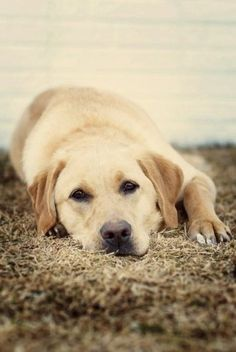 Cute looking doggie relaxing!