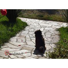 Il tempo dell'attesa del nostro cane quando usciamo di casa 💙🐶 http://www.enedina.it/enegallery/ Buona serata a tutti!