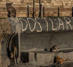 Street Cat Istanbul - graffiti: friends :)