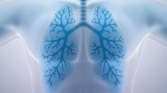 Read about a new study from Canada showing that exposure to air pollution and other environmental factors affect genes related to respiratory disorders such as chronic obstructive pulmonary disease (COPD) and asthma more than genetic ancestry. Ginger Essential Oil, Essential Oils, Vitamin O, Idiopathic Pulmonary Fibrosis, Cystic Fibrosis, Winter Rock, Giving Up Smoking, All I Ever Wanted, Salud