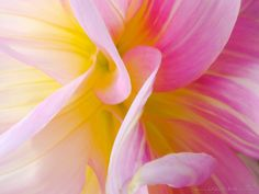 Flower Bouquet - Dahlia Macros Macros, Dahlia, Photographers, How To Memorize Things, Bouquet, Rose, Flowers, Plants, Color