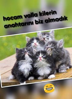 Hafiz, Cats, Animals, Fences, Gatos, Animales, Animaux, Animal, Cat