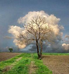 Cloud Tree.