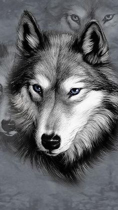 Wolf Pencil Drawing  This is so amazing.... Wish I had this talent.  Or even knew someone who did.   KAT